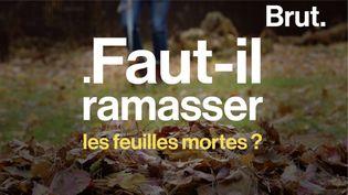 VIDEO. Faut-il ramasser les feuilles mortes en automne ? (BRUT)