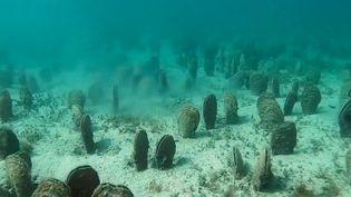 La grande nacre, un coquillage que l'on trouve uniquement en Méditerranée, notamment sur la côte occitane, est en danger. Un mystérieux parasite mortel, qui prolifère probablement à cause du réchauffement climatique, détruit petit à petit les champs de grande nacre. (France 2)