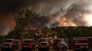 Des pompiers interviennent sur un incendie à Clearlake, en Californie, le 1er août 2015. (JUSTIN SULLIVAN / GETTY IMAGES NORTH AMERICA / AFP)