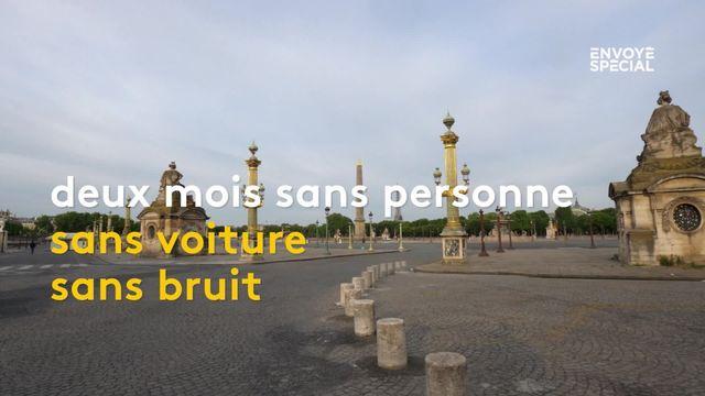 Des animaux sauvages ont profité du déconfinement pour s'installer à Paris