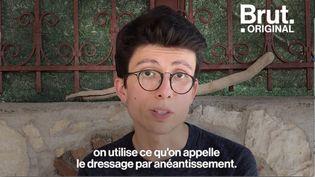 VIDEO. Il alerte sur le calvaire des éléphants dressés pour les touristes (BRUT)