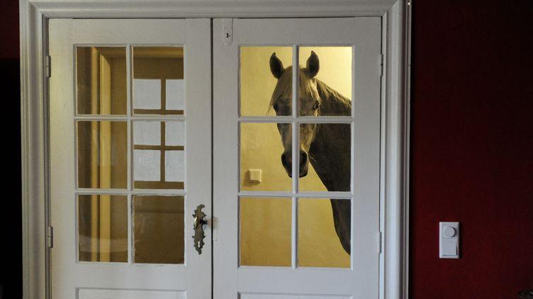 Nasar, un cheval âgé de trois ans, s'est installé depuis décembre 2013 dans la maison de sa propriétaire à Holt (Allemagne). (CARSTEN REHDER / DPA / AFP)