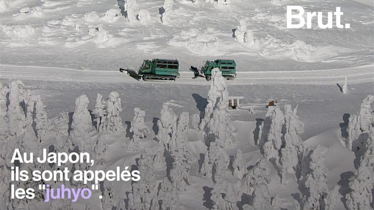 Dans les montagnes japonaises, des structures de glace mystérieuses couvrent les forêts. Une attraction touristique menacée par la hausse des températures. (BRUT)