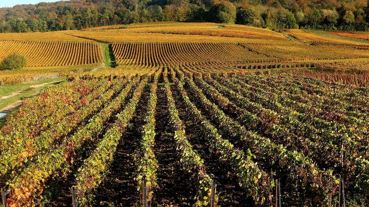 Des vignes à Mailly-Champagne, près de Reims, le 31 octobre 2013. (FRANCOIS NASCIMBENI / AFP)