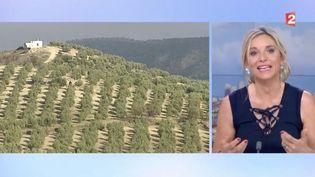 En direct sur le plateau de France 2, Valérie Heurtel explique quels sont les principaux pays producteurs d'huile d'olive. (FRANCE 2)