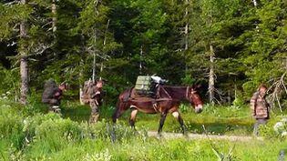 Sur les hauts plateaux du Vercors, entre l'Isère et la Drôme, des mules sont notamment utilisées auprès de l'armée pour transporter de l'eau et de la nourriture. (CAPTURE D'ÉCRAN FRANCE 2)
