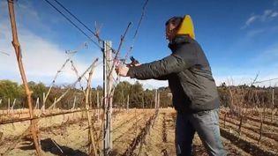 Vins Aude (FRANCEINFO)