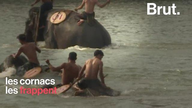 Au Vietnam, le festival Buon Don met en scène des éléphants capables de réaliser toutes sortes de numéros. Plusieurs ONG pointent les techniques de dressage employées.
