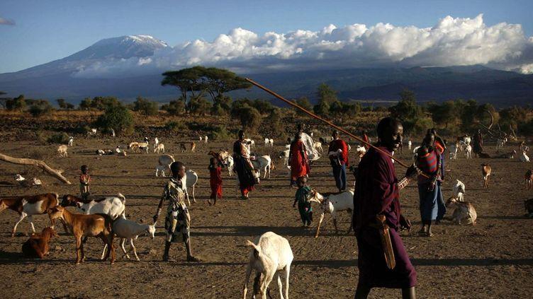 Un berger massaï fait paître son troupeau au pied du Kilimanjaro. (Reuters/Finbarr O'Reilly)