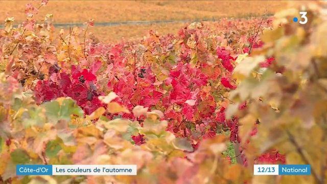Côté d'Or : les vignobles prennent les couleurs de l'automne
