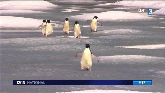 Antarctique : un accord historique créé une zone interdite à la pêche
