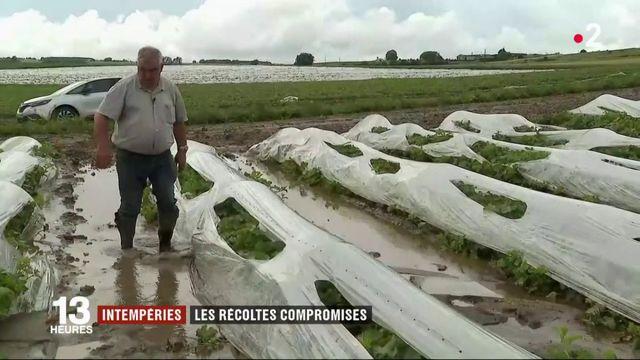Intempéries : les récoltes des agriculteurs compromises