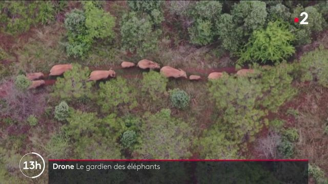 Chine : les drones, gardien de l'odyssée des éléphants sauvages
