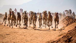 Après plus de six mois d'interruption à cause du coronavirus, une course de chameaux est organisée à nouveau par les Bédouins dans le Sinaï. (KHALED DESOUKI / AFP)
