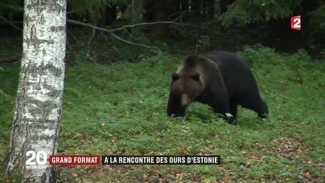Estonie : à la rencontre des ours bruns