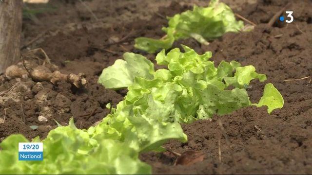Cantal : le retour du jardinage avec les températures estivales