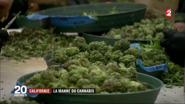Californie : la manne du cannabis