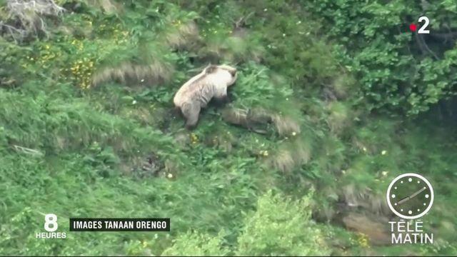 Ariège : un jeune enfant filme un ours sauvage dans les Pyrénées
