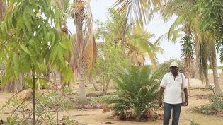 Ils sauvent la planète - Sénégal : un potager dans le désert  (France 2)