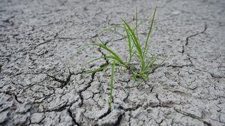 La sécheresse en Allemagne, près d'Osterode, le 23 juillet 2018. (FRANK MAY / PICTURE ALLIANCE / AFP)