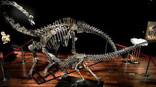 Les dinosaures vendus aux enchères à Drouot  (STEPHANE DE SAKUTIN / AFP)