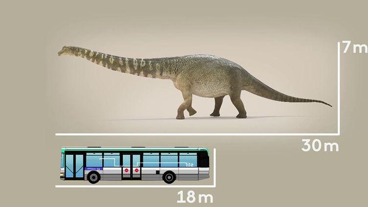 Dinosaures : découverte d'une nouvelle espèce, l'Australotitan (France 3)