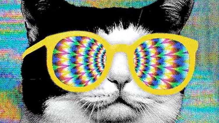 """Extrait de """"All Meow Life"""" le clip 100% félin de Run The Jewels.  (saisie écran)"""