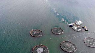 Des associations ont enquêté sur les conditions d'élevage d'un poisson qui s'est démocratisé au fil des années : le saumon fumé. (CAPTURE D'ÉCRAN FRANCE 3)