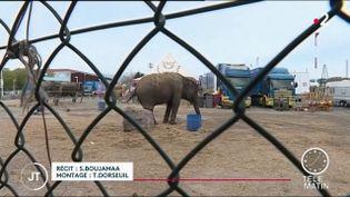 Un éléphant dans un cirque. (France 2)