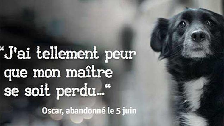 (© Fondation 30 millions d'amis)