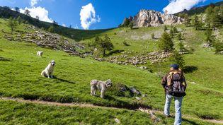 Une randonneuse marche dans le parc national du Mercantour,den Provence-Alpes-Côte d'Azur,le 10 mai 2014. (BERTRAND BODIN / ONLY FRANCE / AFP)