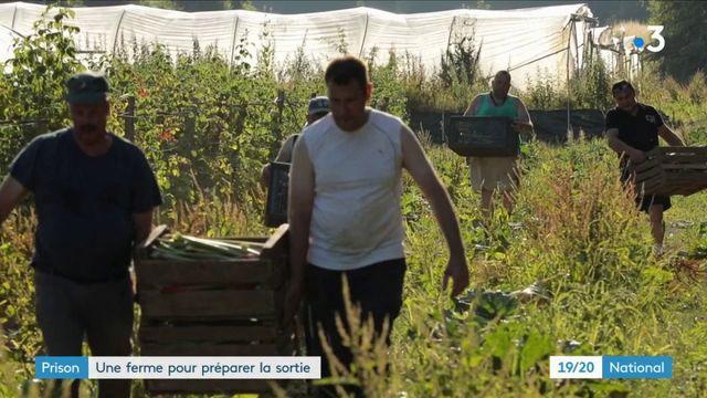 Prison : une ferme pour préparer la sortie
