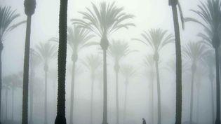 Palmiers dans la brume à Buena Park (Californie), le 21 mars 2012. (KEN STEINHARDT / AP / SIPA)