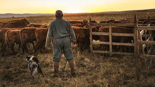 Un fermier producteur de salers avec son troupeau de vaches du même nom, le 7 septembre 2016 à Collandres (Cantal), une commune qui fait aussi partie de la zone de production du bleu d'Auvergne. (WITT PIERRE / AFP)