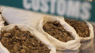 A Hong Kong, deux tonnes d'écailles de pangolines ont été saisies au marché noir en juin 2014, pour une valeur totale de 1,15 millions d'euros. (ALEX HOFFORD / MAXPPP)