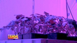 Agriculture du futur aux Pays-Bas (FRANCE 3)
