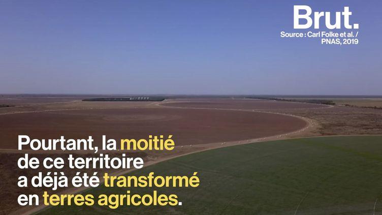 VIDEO. La culture de soja, un désastre écologique au Brésil (BRUT)