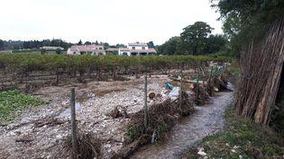 Une parcelle de Maison Ventenac, à Ventenac-Cabardès (Aude), après les pluies du 15 octobre. Le lit du petit ruisseau, le Gazel,s'est déplacé et coule désormais en partie dans les rangs de vigne. (BENJAMIN MATHIEU / RADIO FRANCE)