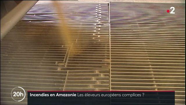 Amazonie : l'Europe est-elle également responsable de la déforestation ?