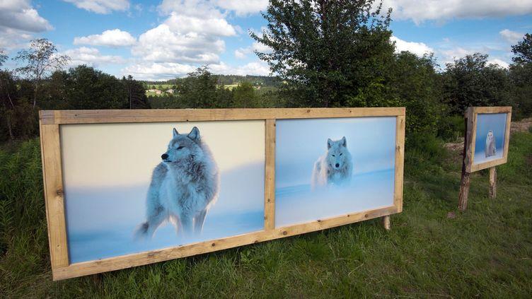 """Les loups arctiques photographiés par Vincent Munier, exposés sur Les sentiers de la photo  (""""Les sentiers de la photo"""")"""