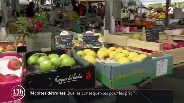 Épisode de gel historique : quelles conséquences sur le prix des fruits ?