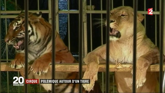 Tigre abattu à Paris : faut-il interdire les animaux dans les cirques ?