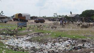 Un point d'eau recouvert de sachetsplastiques aumarché aux moutons de Djeffa à quelques kilomètres de Cotonou, la capitale économique du Bénin.  (DELPHINE BOUSQUET / RADIO FRANCE)