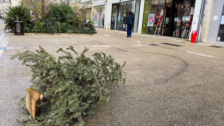 Un sapin jeté dans le centre-ville de Niort (Deux-Sèvres) le 13 janvier 2021 (NOÉMIE GUILLOTIN / FRANCE BLEU POITOU / RADIO FRANCE)