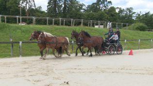 L'équicoaching, une activité utile pour apprendre à guider les chevaux... et ses équipes. (France 3 Normandie)