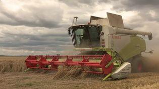 Agriculture : une saison difficile en raison des fortes pluies. (FRANCEINFO)