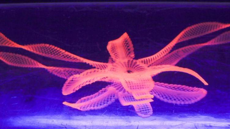 Capture d'écran d'une vidéo publiée le 25 janvier 2016 par le Wyss Institute d'Harvard, montrant une fleur imprimée en 3D dont la forme change une fois insérée dans l'eau. (WYSS INSTITUTE D'HARVARD)