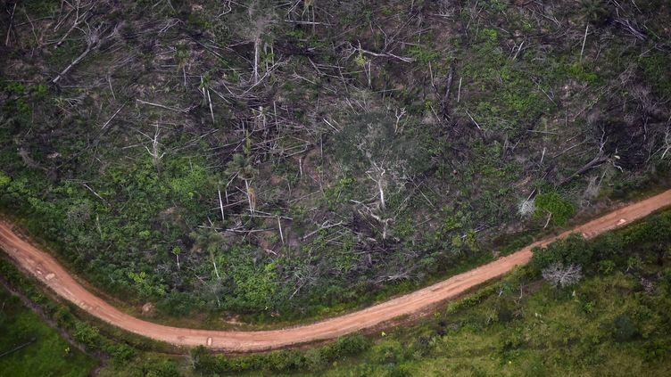 Un acte de déforestation illégale du parc nationale de La Macarena en Colombie, le 3 septembre 2020. (RAUL ARBOLEDA / AFP)
