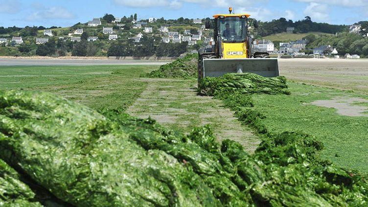 (Des algues vertes sur la plage de Saint-Michel-en-Grève dans les Côtes d'Armor © MaxPPP)
