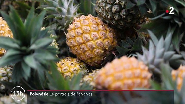 L'île de Moorea, en Polynésie française, est connue pour être le paradis des ananas. Le savoir-faire des cultivateurs s'y transmet de génération en génération. (FRANCE 2)